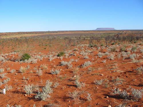 Австралийская растительность