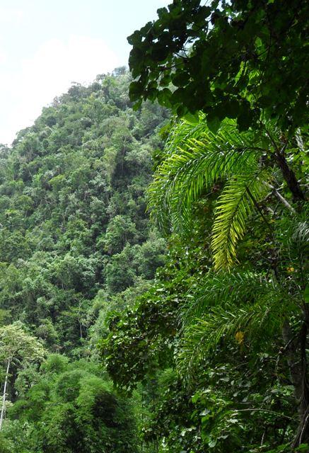 Амазонские леса