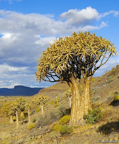 Растительность в Африке
